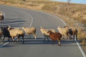 Travelnews.lv ar auto apceļo Kabarda-Balkārijas republiku Krievijā. Atbalsta: Magtur 79
