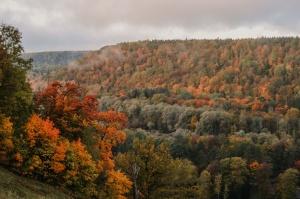 Sigulda var dižoties daudzveidīgām rudens ainavām pilsētā un tās apkārtnē 6