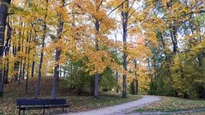 Preiļu pilsētu un parku ieskauj rudens zelts 6