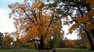 Preiļu pilsētu un parku ieskauj rudens zelts 10