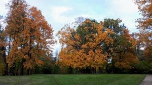 Preiļu pilsētu un parku ieskauj rudens zelts 11