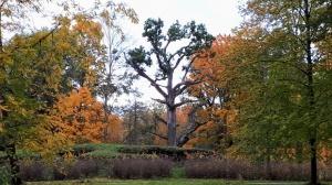 Preiļu pilsētu un parku ieskauj rudens zelts 13