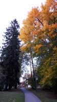 Preiļu pilsētu un parku ieskauj rudens zelts 20