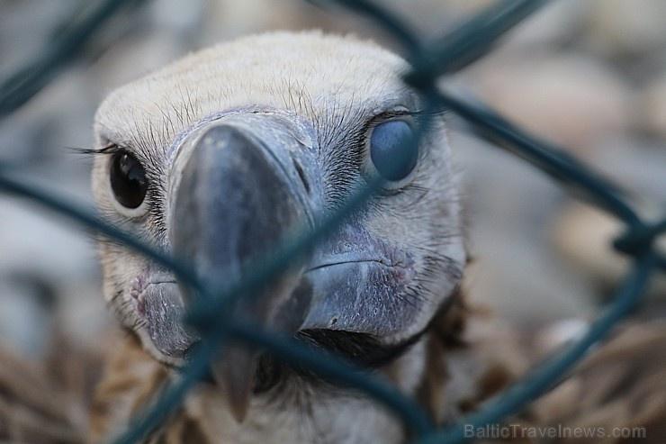 Travelnews.lv apmeklē plēsējputnu centru «Kalba Bird of Prey Centre» Šārdžas emirātā. Atbalsta: VisitSharjah.com un Novatours.lv