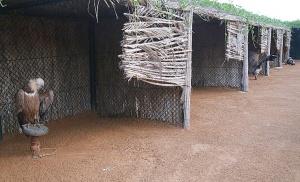 Travelnews.lv apmeklē plēsējputnu centru «Kalba Bird of Prey Centre» Šārdžas emirātā. Atbalsta: VisitSharjah.com un Novatours.lv 6