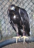 Travelnews.lv apmeklē plēsējputnu centru «Kalba Bird of Prey Centre» Šārdžas emirātā. Atbalsta: VisitSharjah.com un Novatours.lv 7