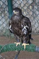 Travelnews.lv apmeklē plēsējputnu centru «Kalba Bird of Prey Centre» Šārdžas emirātā. Atbalsta: VisitSharjah.com un Novatours.lv 8