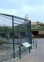 Travelnews.lv apmeklē plēsējputnu centru «Kalba Bird of Prey Centre» Šārdžas emirātā. Atbalsta: VisitSharjah.com un Novatours.lv 11