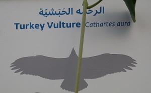 Travelnews.lv apmeklē plēsējputnu centru «Kalba Bird of Prey Centre» Šārdžas emirātā. Atbalsta: VisitSharjah.com un Novatours.lv 15