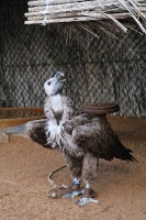 Travelnews.lv apmeklē plēsējputnu centru «Kalba Bird of Prey Centre» Šārdžas emirātā. Atbalsta: VisitSharjah.com un Novatours.lv 20