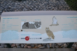 Travelnews.lv apmeklē plēsējputnu centru «Kalba Bird of Prey Centre» Šārdžas emirātā. Atbalsta: VisitSharjah.com un Novatours.lv 32