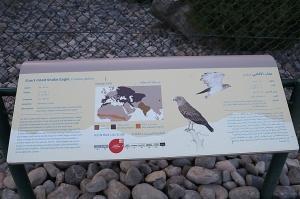 Travelnews.lv apmeklē plēsējputnu centru «Kalba Bird of Prey Centre» Šārdžas emirātā. Atbalsta: VisitSharjah.com un Novatours.lv 35