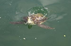 Travelnews.lv ar nakšņojumu iepazīst burvīgu vietu uz salas «Kingfisher Lodge». Atbalsta: VisitSharjah.com un Novatours.lv 62