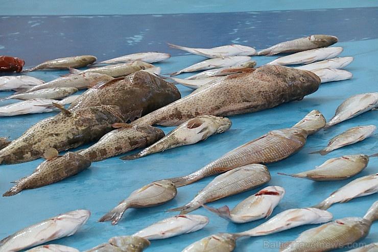 Travelnews.lv apmeklē Šārdžas zivju tirgus izsoli un ekskluzīvi iekļūst ostas zonā. Atbalsta: VisitSharjah.com un Novatours.lv 273211