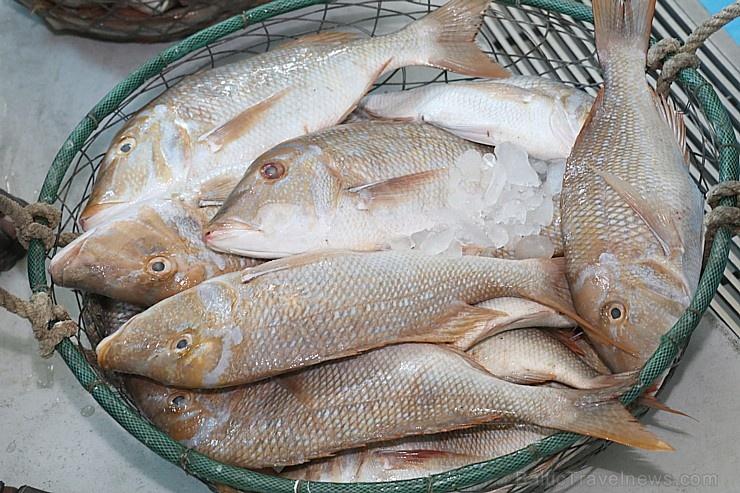 Travelnews.lv apmeklē Šārdžas zivju tirgus izsoli un ekskluzīvi iekļūst ostas zonā. Atbalsta: VisitSharjah.com un Novatours.lv 273220