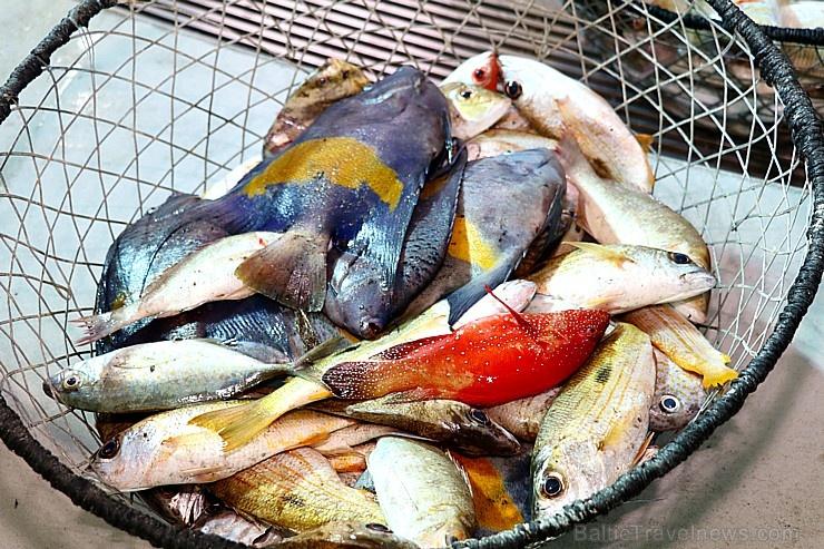 Travelnews.lv apmeklē Šārdžas zivju tirgus izsoli un ekskluzīvi iekļūst ostas zonā. Atbalsta: VisitSharjah.com un Novatours.lv 273221