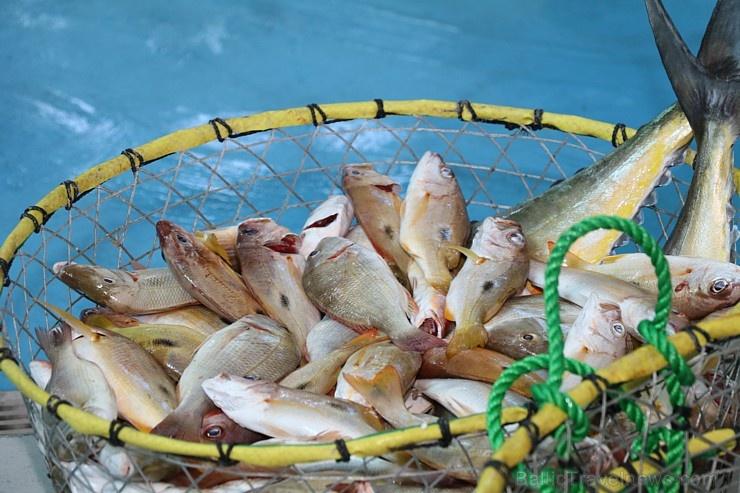 Travelnews.lv apmeklē Šārdžas zivju tirgus izsoli un ekskluzīvi iekļūst ostas zonā. Atbalsta: VisitSharjah.com un Novatours.lv 273226