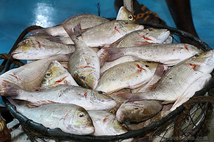 Travelnews.lv apmeklē Šārdžas zivju tirgus izsoli un ekskluzīvi iekļūst ostas zonā. Atbalsta: VisitSharjah.com un Novatours.lv 273228