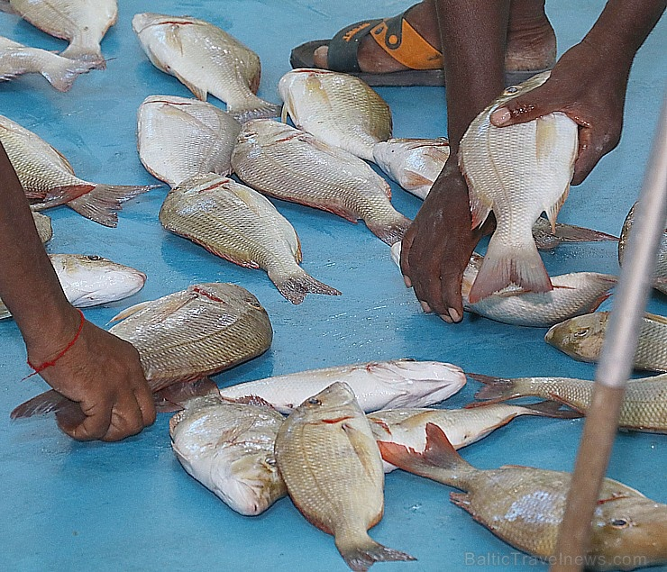 Travelnews.lv apmeklē Šārdžas zivju tirgus izsoli un ekskluzīvi iekļūst ostas zonā. Atbalsta: VisitSharjah.com un Novatours.lv 273232