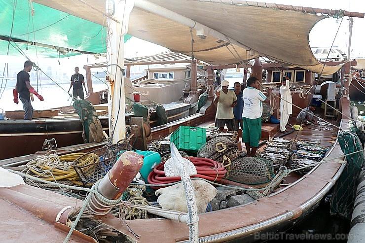 Travelnews.lv apmeklē Šārdžas zivju tirgus izsoli un ekskluzīvi iekļūst ostas zonā. Atbalsta: VisitSharjah.com un Novatours.lv 273242
