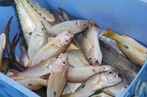 Travelnews.lv apmeklē Šārdžas zivju tirgus izsoli un ekskluzīvi iekļūst ostas zonā. Atbalsta: VisitSharjah.com un Novatours.lv 14