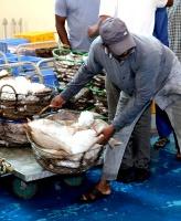 Travelnews.lv apmeklē Šārdžas zivju tirgus izsoli un ekskluzīvi iekļūst ostas zonā. Atbalsta: VisitSharjah.com un Novatours.lv 17
