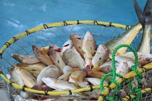 Travelnews.lv apmeklē Šārdžas zivju tirgus izsoli un ekskluzīvi iekļūst ostas zonā. Atbalsta: VisitSharjah.com un Novatours.lv 18