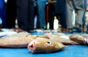 Travelnews.lv apmeklē Šārdžas zivju tirgus izsoli un ekskluzīvi iekļūst ostas zonā. Atbalsta: VisitSharjah.com un Novatours.lv 22