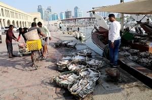 Travelnews.lv apmeklē Šārdžas zivju tirgus izsoli un ekskluzīvi iekļūst ostas zonā. Atbalsta: VisitSharjah.com un Novatours.lv 29