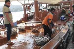 Travelnews.lv apmeklē Šārdžas zivju tirgus izsoli un ekskluzīvi iekļūst ostas zonā. Atbalsta: VisitSharjah.com un Novatours.lv 32