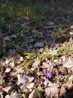 Staigājot pa taku, ir iespējams aplūkot augu, sūnu, ķērpju un kukaiņu daudzveidību, dižkokus, Jāņupītes stāvkrastu, kā arī novērtēt 2005. gada orkāna  6