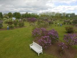 Dobeles Ceriņu dārzā var baudīt pasakaino ziedu dažādību 5