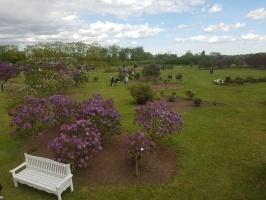Dobeles Ceriņu dārzā var baudīt pasakaino ziedu dažādību 6