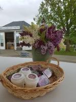 Dobeles Ceriņu dārzā var baudīt pasakaino ziedu dažādību 15