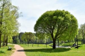 Valmiera sveicina vasaru, koši plaukstot un zaļojot 9