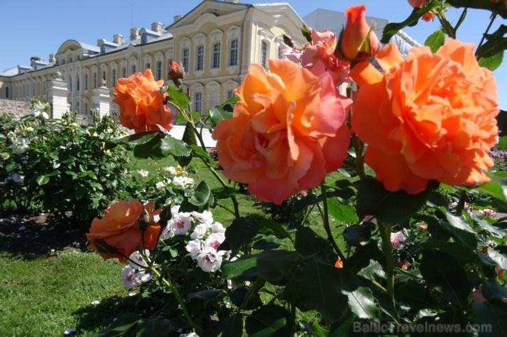 Rundāles pili ieskauj krāšņi rožu ziedi