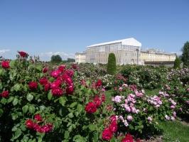 Rundāles pili ieskauj krāšņi rožu ziedi 5