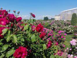 Rundāles pili ieskauj krāšņi rožu ziedi 20