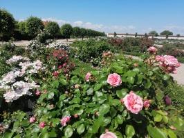 Rundāles pili ieskauj krāšņi rožu ziedi 23