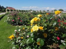 Rundāles pili ieskauj krāšņi rožu ziedi 26