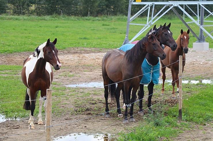 Travelnews.lv apmeklē zirgu stalli «Piķurgas» Salaspilī 290676