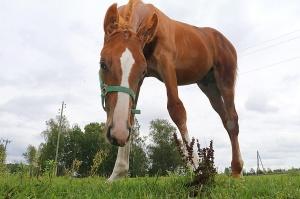 Travelnews.lv apmeklē zirgu stalli «Piķurgas» Salaspilī 1