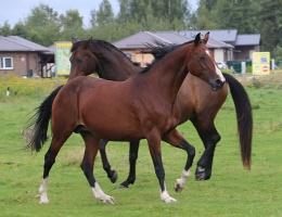 Travelnews.lv apmeklē zirgu stalli «Piķurgas» Salaspilī 3