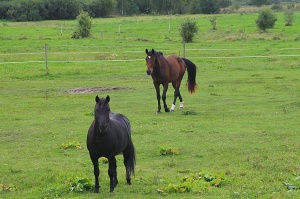 Travelnews.lv apmeklē zirgu stalli «Piķurgas» Salaspilī 5
