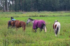 Travelnews.lv apmeklē zirgu stalli «Piķurgas» Salaspilī 6