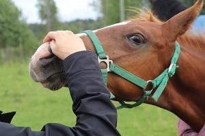 Travelnews.lv apmeklē zirgu stalli «Piķurgas» Salaspilī 8