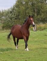Travelnews.lv apmeklē zirgu stalli «Piķurgas» Salaspilī 9