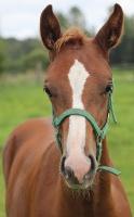 Travelnews.lv apmeklē zirgu stalli «Piķurgas» Salaspilī 10