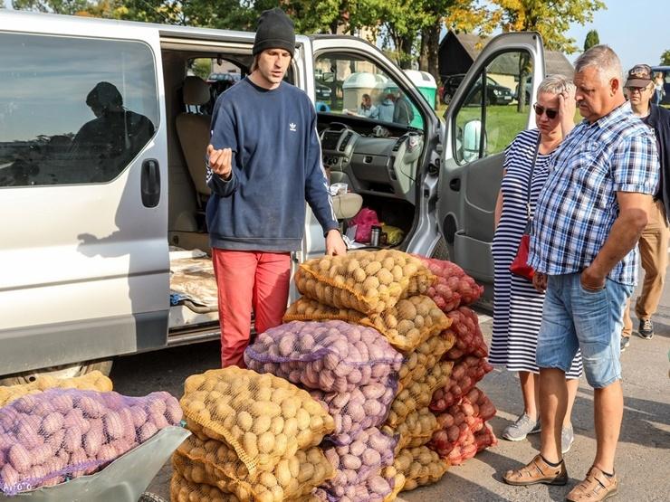 Madona svin kartupeļu svētkus 291880