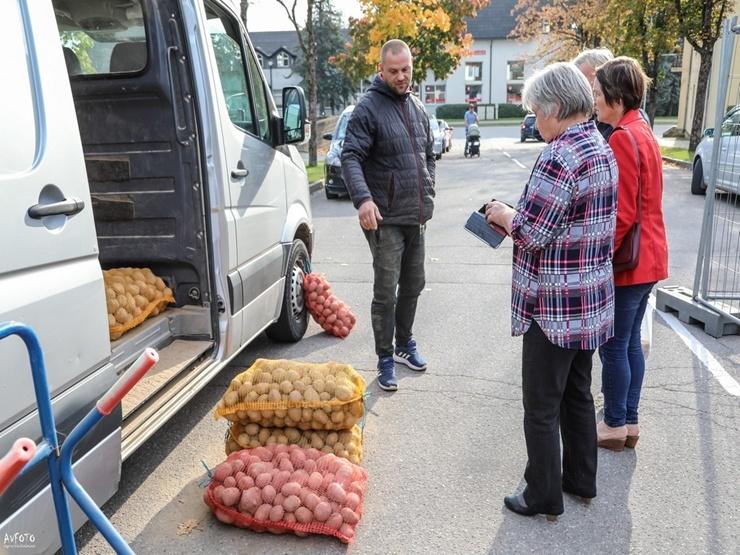 Madona svin kartupeļu svētkus 291916